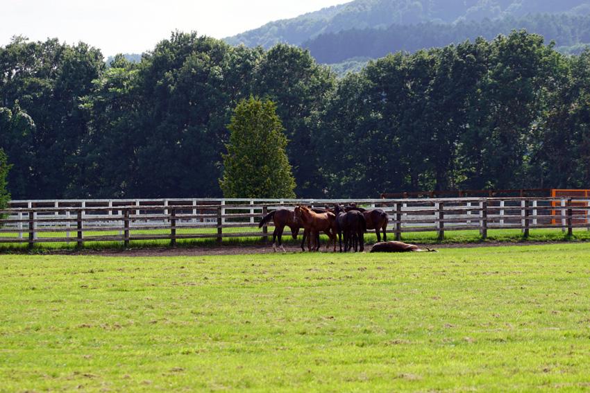 クリスビーナスの14を含む募集馬たち