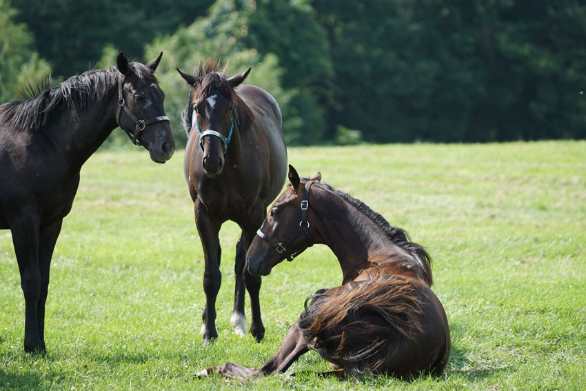 寝ていた馬も起きて歓迎かな?ビックレッドファーム明和