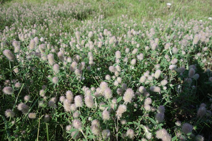 湖畔の植物