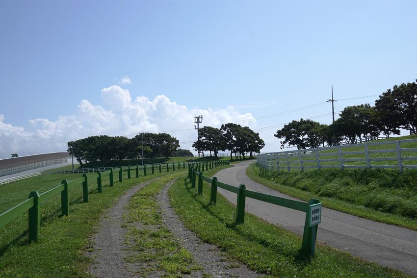 坂路調教見学場所の先にある木が見えるところが将来の・・・