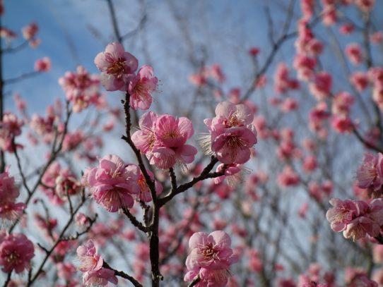 まもなく春ですね~