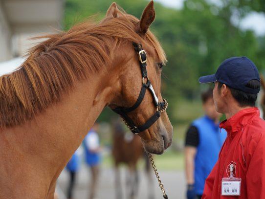 2017年 ウイン・ラフィアンツアー募集馬 ウのNO.21~NO.28