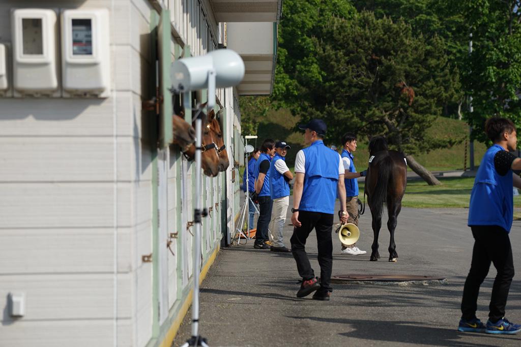 2017年 ウイン・ラフィアンツアー募集馬 ウのNO.6~NO.10