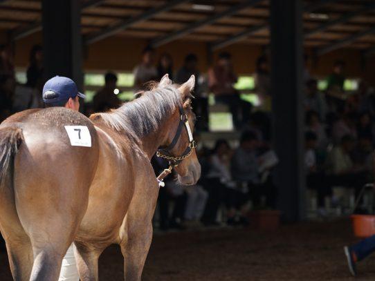 2017年ラフィアン・ウインツアー 募集馬 ラのNO.6~NO.8