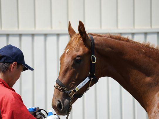 2017年ラフィアン・ウインツアー募集馬 ラのNO.10~NO.12