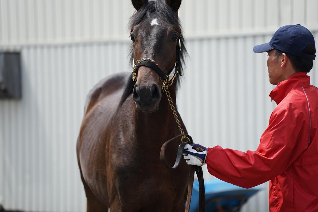 2017年 ラフィアン・ウインツアー 募集馬 ラのNO.25~NO.27