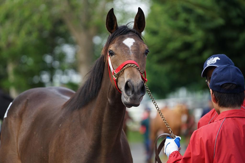 2017年 ラフィアン・ウインツアー募集馬 ラのNO.37~NO.39