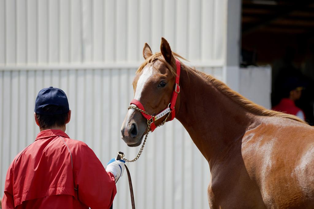 2017年 ラフィアン・ウインツアー募集馬 ラのNO.44~NO.46