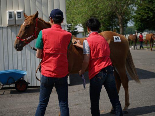 2017年 ラフィアン・ウインツアー募集馬 ラのNO.47~NO.49